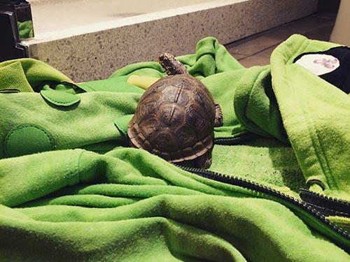 trippy-turtle-newspeak-montreal-2017-11-04-tickets-1778